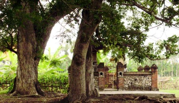 pohon dan pura